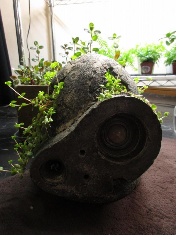 植物「生育旺盛な謎の植物」_b0362459_11385277.jpg