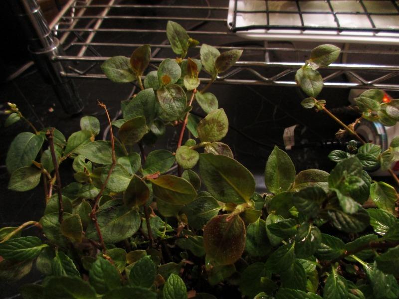 植物「生育旺盛な謎の植物」_b0362459_12484758.jpg
