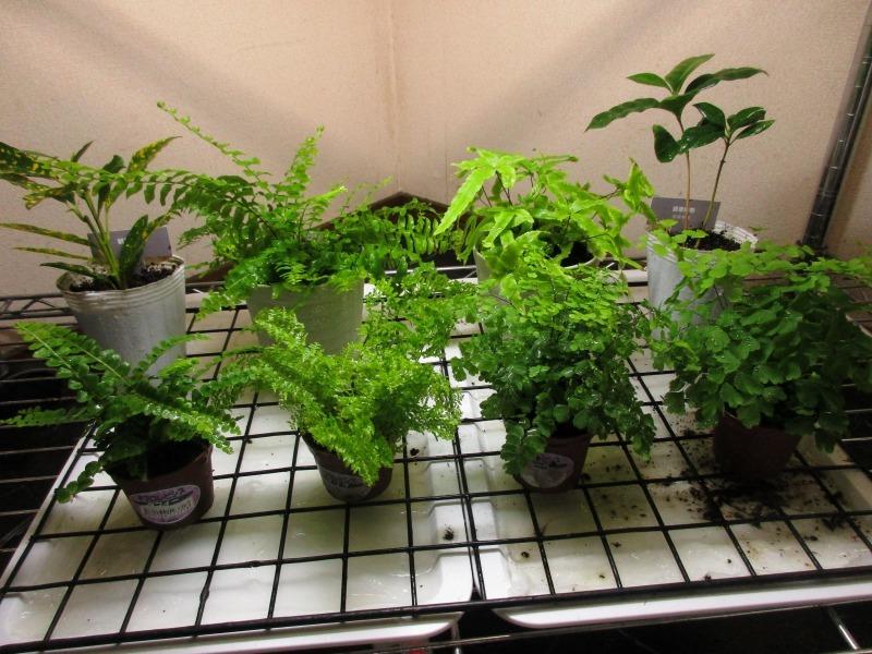 植物「生育旺盛な謎の植物」_b0362459_13090512.jpg