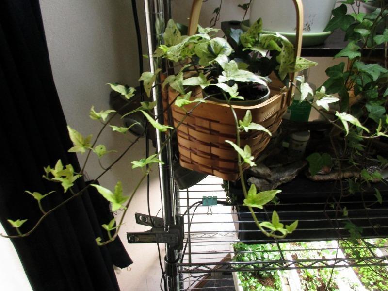 植物「生育旺盛な謎の植物」_b0362459_13122625.jpg