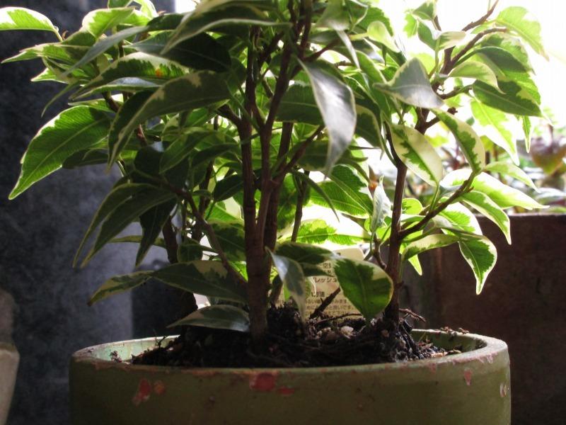 植物「生育旺盛な謎の植物」_b0362459_13252068.jpg