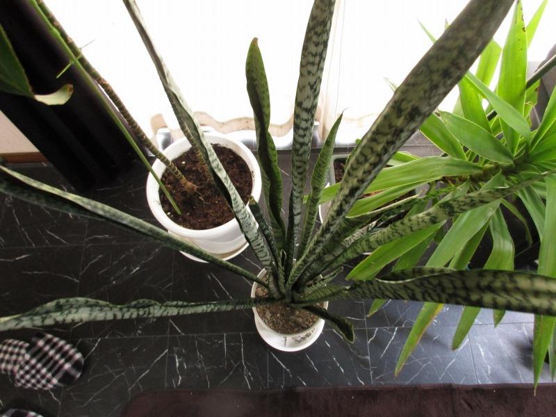 植物「生育旺盛な謎の植物」_b0362459_13362229.jpg