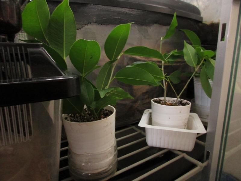 植物「生育旺盛な謎の植物」_b0362459_13382441.jpg