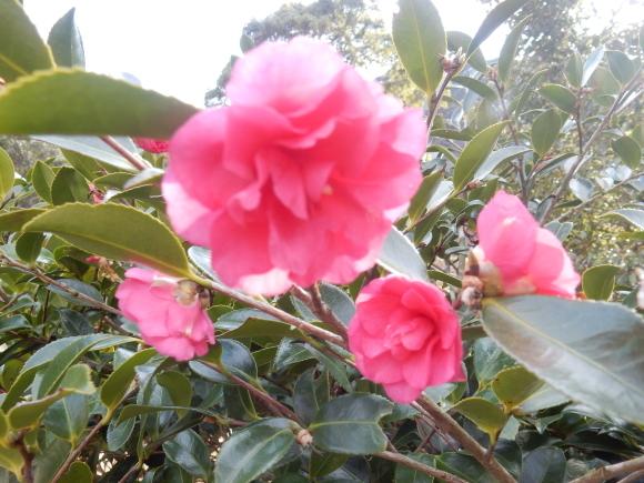 '19,2,28(木)今日も春の花を探しに~!_f0060461_10222349.jpg