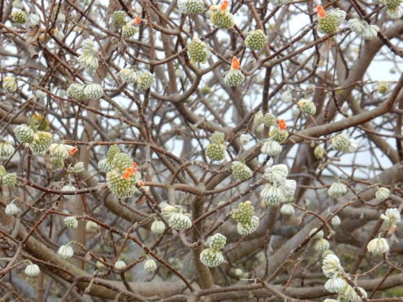 '19,2,28(木)今日も春の花を探しに~!_f0060461_10283344.jpg