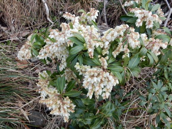 '19,2,28(木)今日も春の花を探しに~!_f0060461_10311398.jpg
