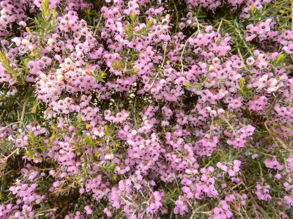 '19,2,28(木)今日も春の花を探しに~!_f0060461_10334785.jpg