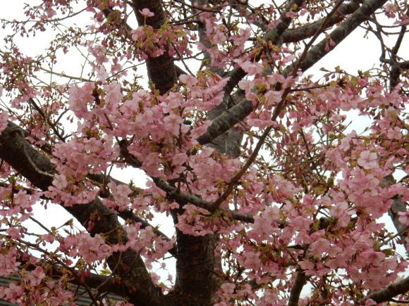 '19,2,28(木)今日も春の花を探しに~!_f0060461_10345779.jpg
