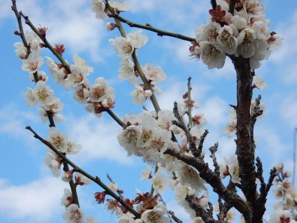 '19,2,28(木)今日も春の花を探しに~!_f0060461_10392684.jpg