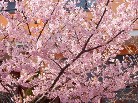 '19,2,28(木)今日も春の花を探しに~!_f0060461_10430810.jpg