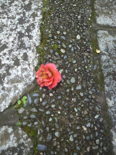 鎌倉 瑞泉寺の黄梅。_e0086881_22403724.jpg