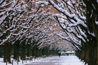 春の予感_f0118184_11301916.jpg