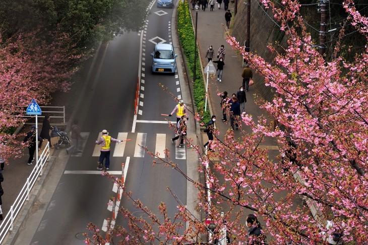 三浦海岸桜まつり_e0305388_20552199.jpg