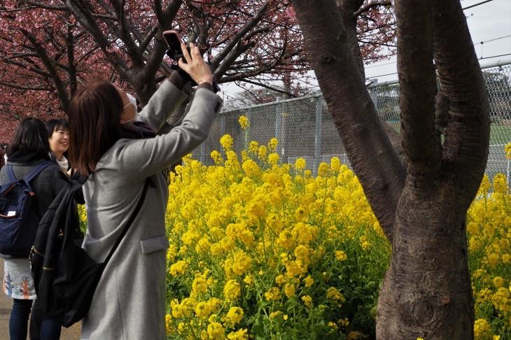 三浦海岸桜まつり_e0305388_20563616.jpg