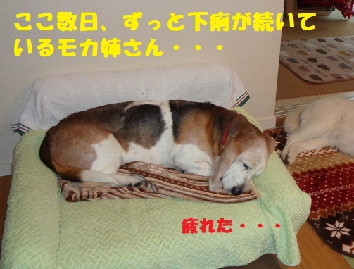 f0121712_06364477.jpg