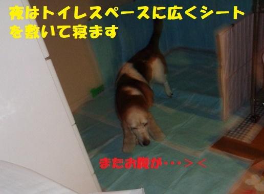 f0121712_06450202.jpg