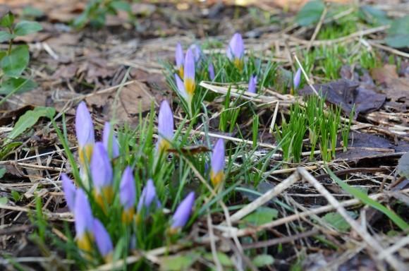 春の息吹_c0202242_08583863.jpg