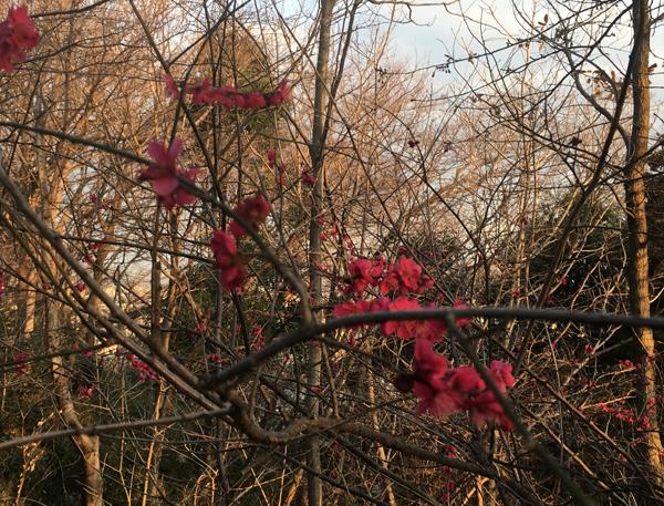 春はもうすぐ!_c0110361_14293895.jpg