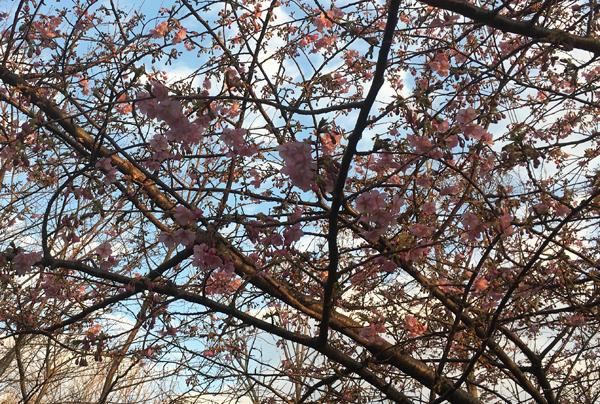 春はもうすぐ!_c0110361_14303232.jpg