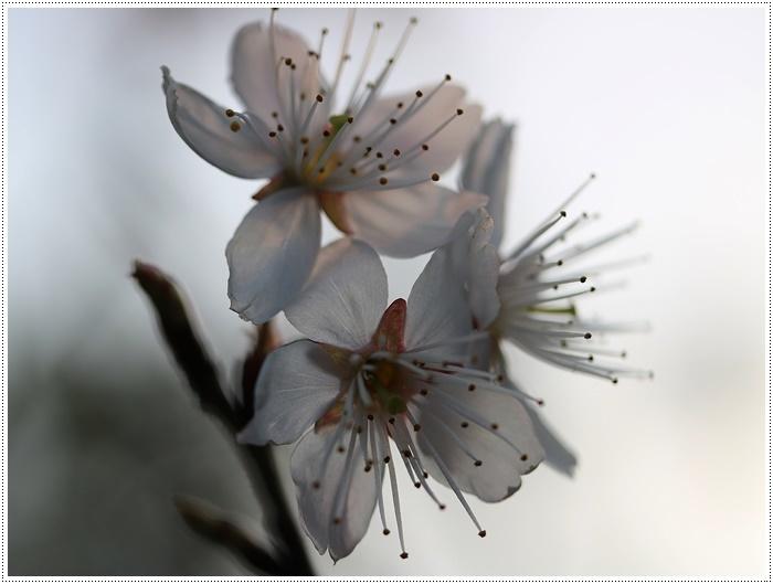 ブログネタがない時は、無理やりさくらと大をモデルにしたり、花にカメラを向けたり( *´艸`)クスクス_b0175688_20382859.jpg