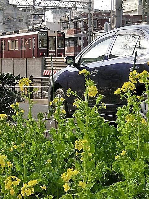 小さな春を探す、道端に咲き始めた可愛い菜の花に逢いました、菜の花は春の訪れを告げていました。阪急電車と菜の花_d0181492_23120224.jpg