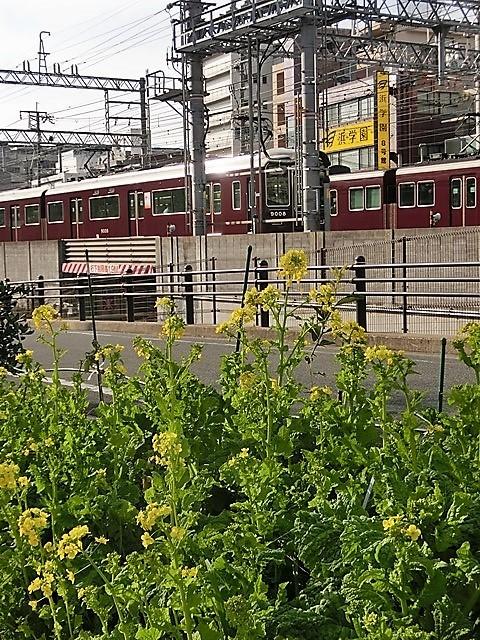 小さな春を探す、道端に咲き始めた可愛い菜の花に逢いました、菜の花は春の訪れを告げていました。阪急電車と菜の花_d0181492_23122487.jpg