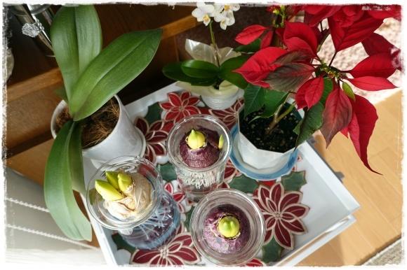 2月の振り返り♪植物編♡_b0151893_13260481.jpg