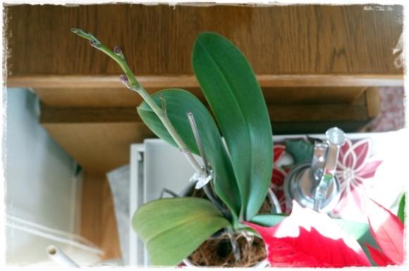2月の振り返り♪植物編♡_b0151893_13282138.jpg