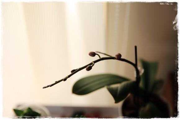 2月の振り返り♪植物編♡_b0151893_13304153.jpg