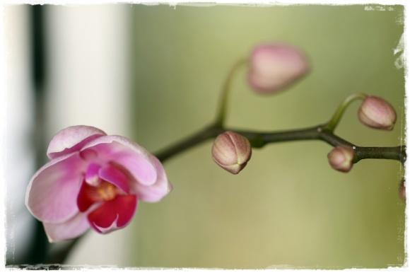 2月の振り返り♪植物編♡_b0151893_13311296.jpg