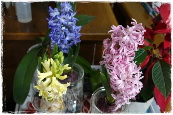 2月の振り返り♪植物編♡_b0151893_13323597.jpg
