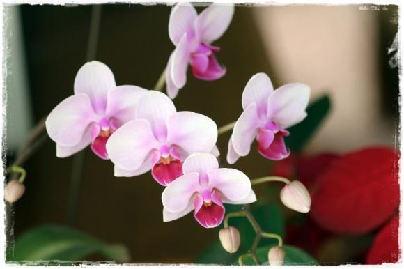 2月の振り返り♪植物編♡_b0151893_13355539.jpg