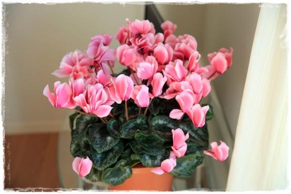 2月の振り返り♪植物編♡_b0151893_14163064.jpg