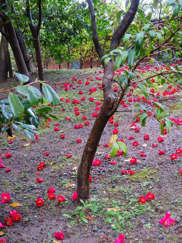 城南宮の「庭の椿の芸術」20190228_e0237645_00012327.jpg