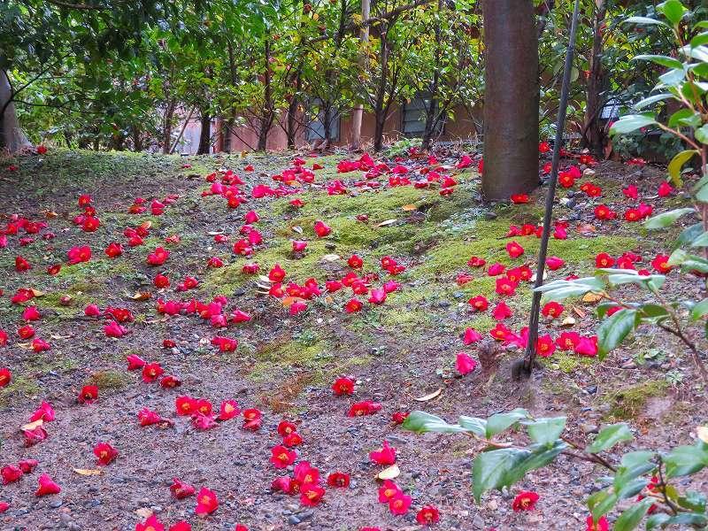 城南宮の「庭の椿の芸術」20190228_e0237645_00012347.jpg