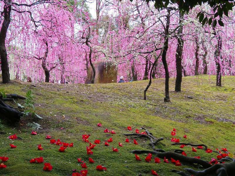 城南宮の「庭の椿の芸術」20190228_e0237645_00023919.jpg