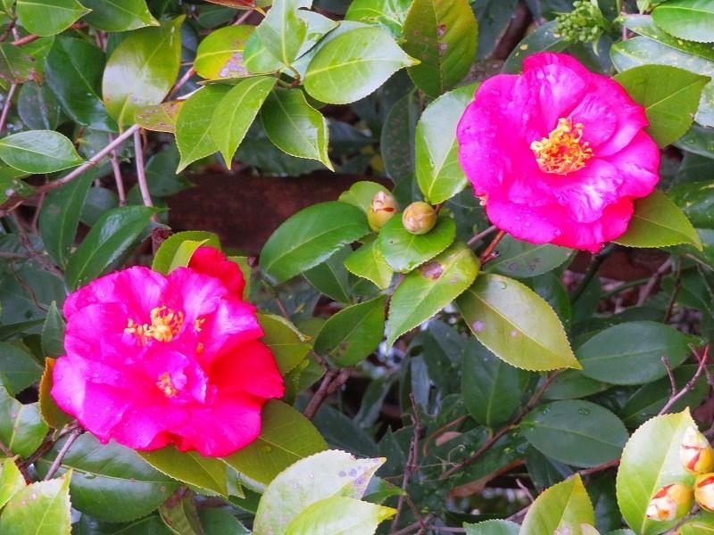城南宮の「庭の椿の芸術」20190228_e0237645_00024097.jpg