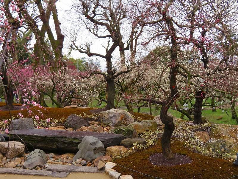 東風吹かば~「北野天満宮」の梅の花20190228_e0237645_11202211.jpg