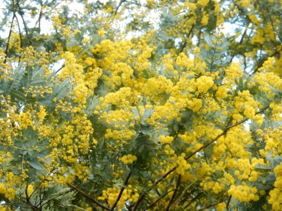 '19,3,2(土)やっと春が~~~!_f0060461_10540767.jpg