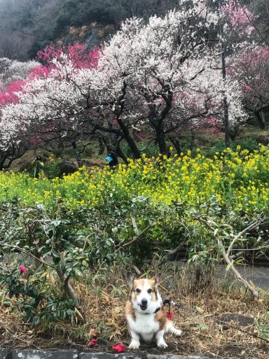 梅、桜_f0101201_22505973.jpg