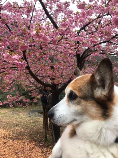 梅、桜_f0101201_23002418.jpg