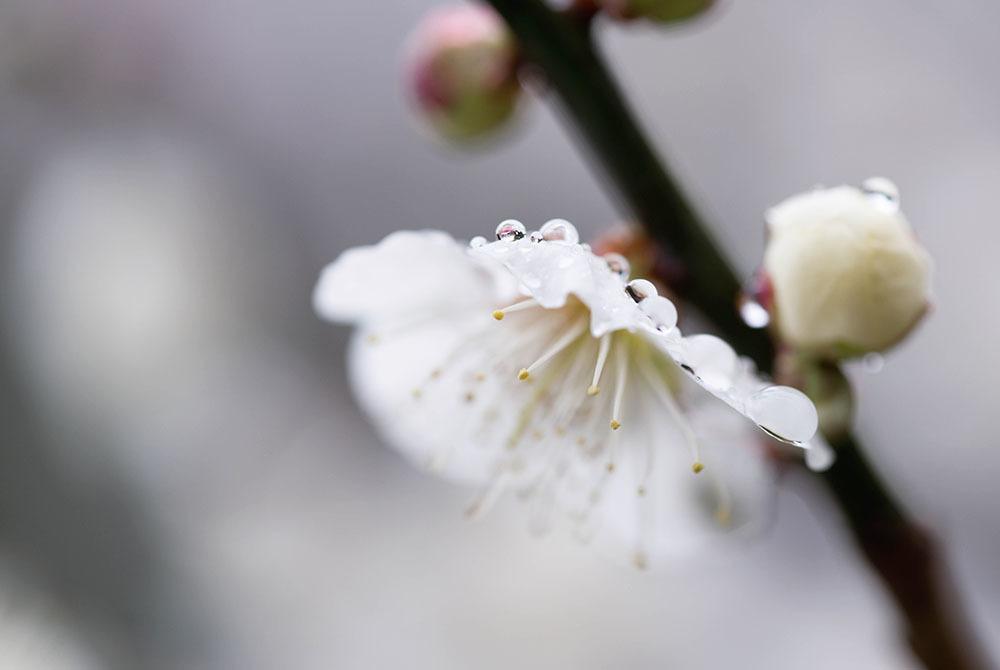 梅の花_f0324026_15005988.jpg