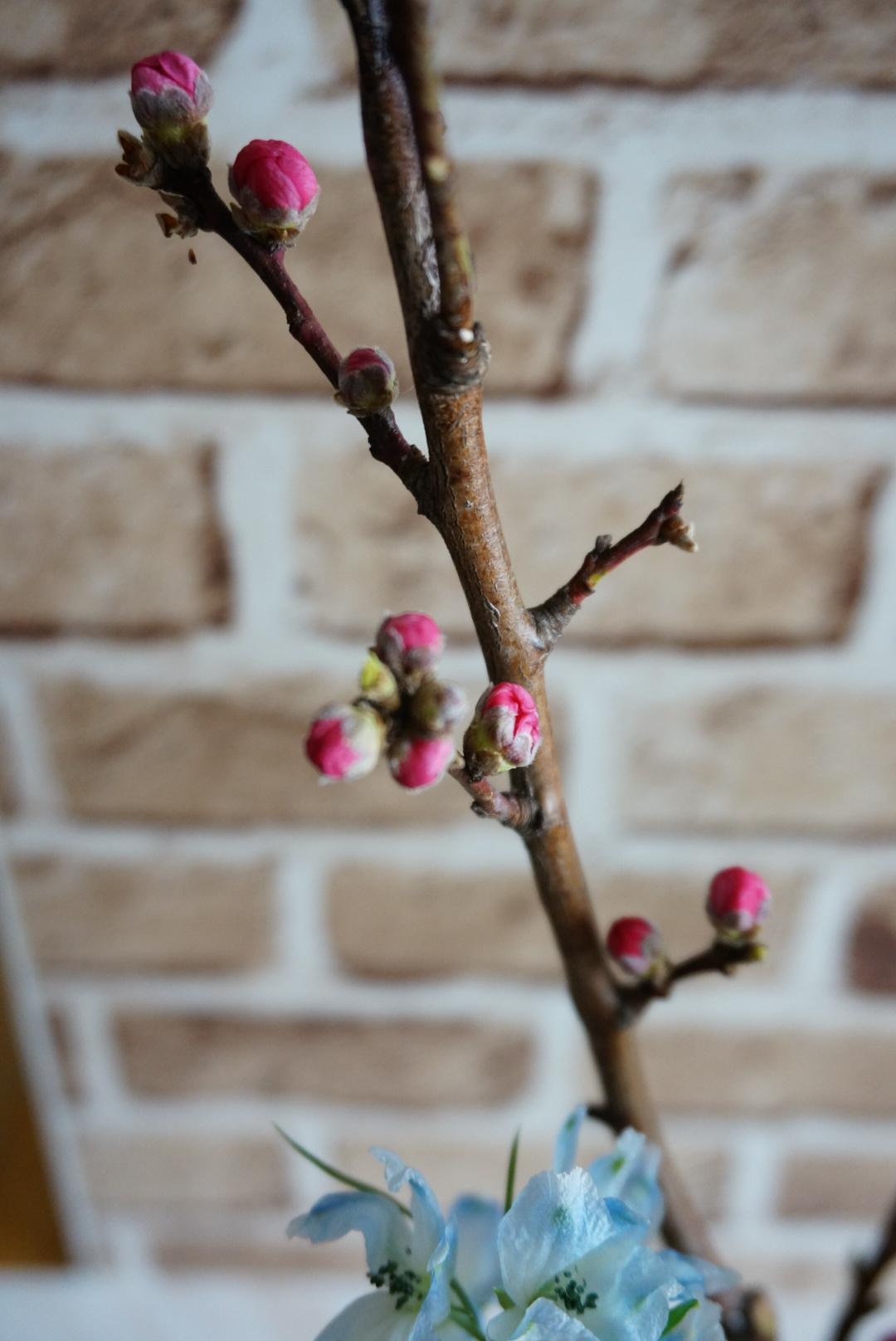 桃の花のアレンジメント_c0226331_15120926.jpg