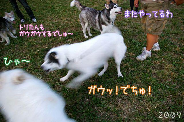 おっきな公園の思ひ出_c0062832_18353631.jpg