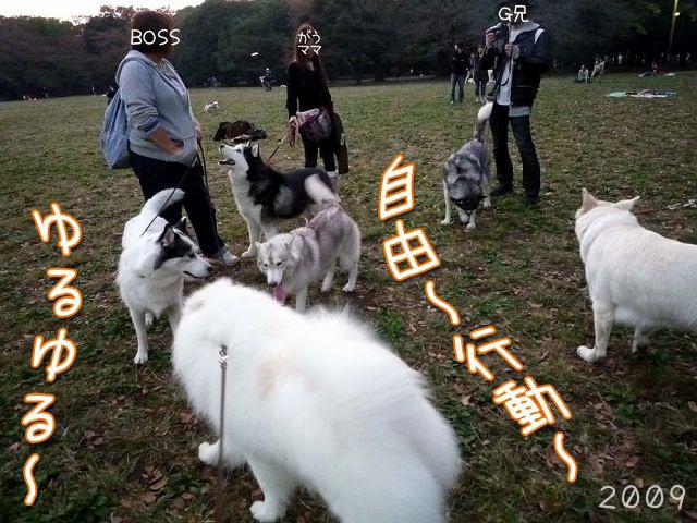 おっきな公園の思ひ出_c0062832_19383401.jpg
