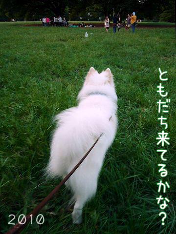 おっきな公園の思ひ出_c0062832_20215750.jpg