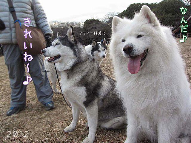 おっきな公園の思ひ出_c0062832_20231410.jpg
