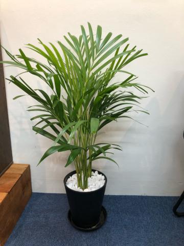 店の植物たちの話_b0399958_13005353.jpg