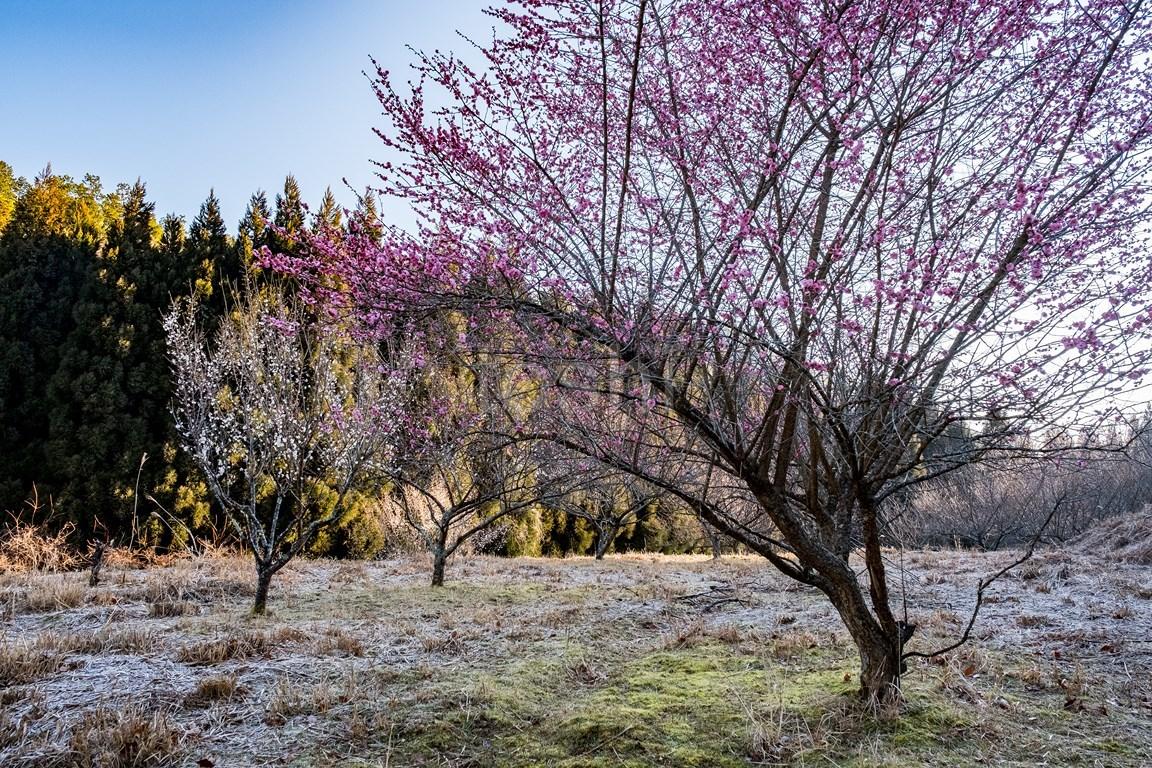春は近い_c0350572_18404236.jpg