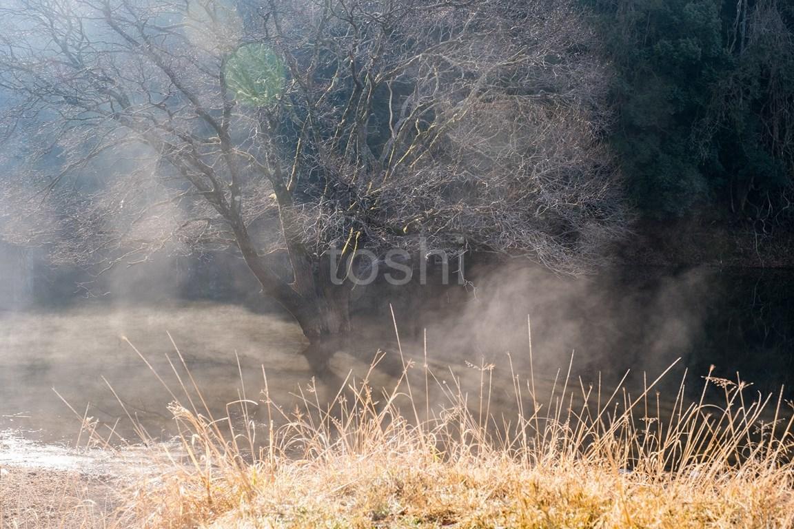 春は近い_c0350572_18412401.jpg